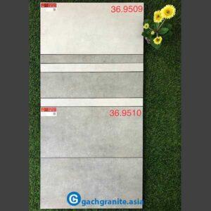 Gạch ốp tường 300x600 prime 9509
